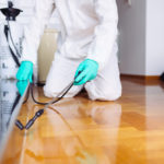 Are You Despondent With Having Scorpios In The Home? Call Pest Control