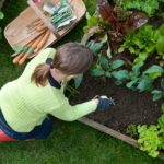 Perfect Additions And Ideas For Fall Gardening