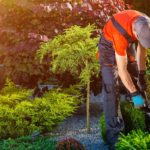 3 Common Mistakes To Avoid While Fertilising Lawn