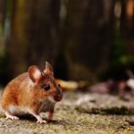 Choosing The Best Pest Control Company In Your Area